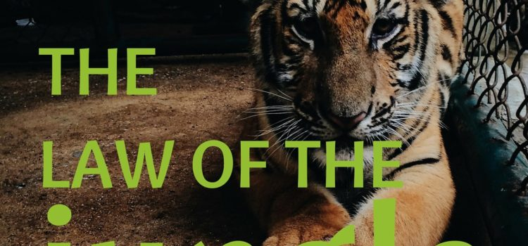 Episode 040:  The Law of the Jungle